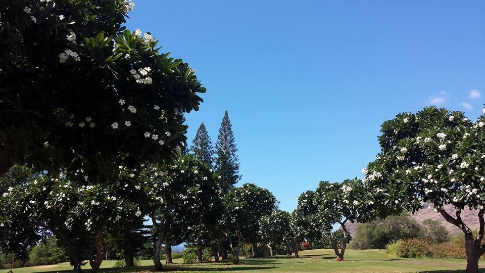 マカハバレーのゴルフコースはプルメリアの香りでいっぱい