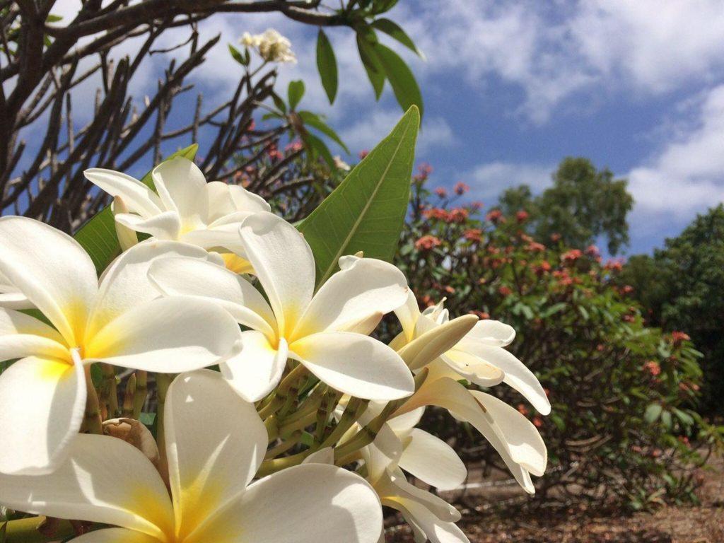 ハワイの春を感じよう!「ココクレーター ボタニカルガーデン」