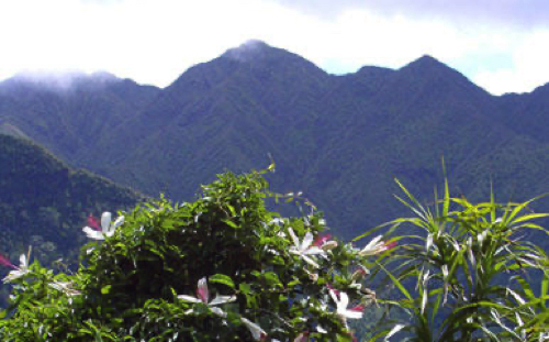 【ネイチャー&カルチャー】コオラウ山脈ジャングルハイキング